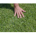 Palmetto Turf Direct